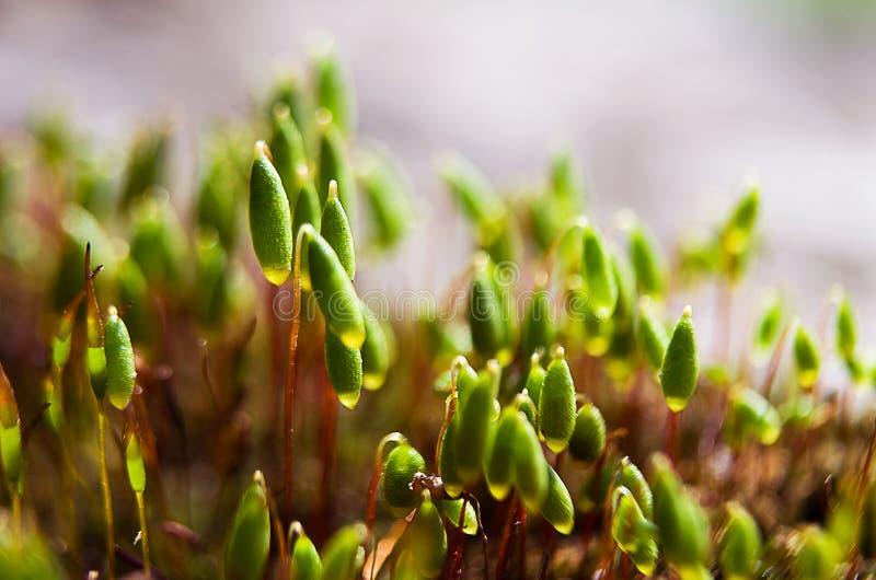 Musgo verde macro fotografia de stock