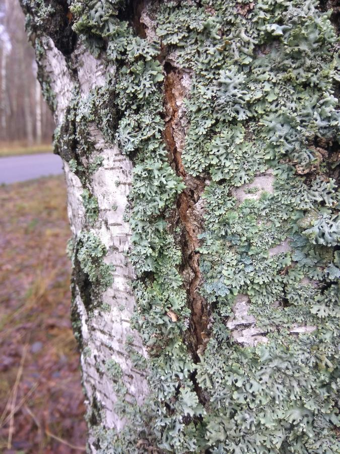 Musgo verde na árvore fotografia de stock