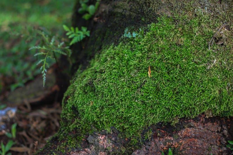 Musgo verde na árvore imagem de stock