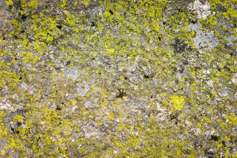 Musgo verde na textura do grunge foto de stock