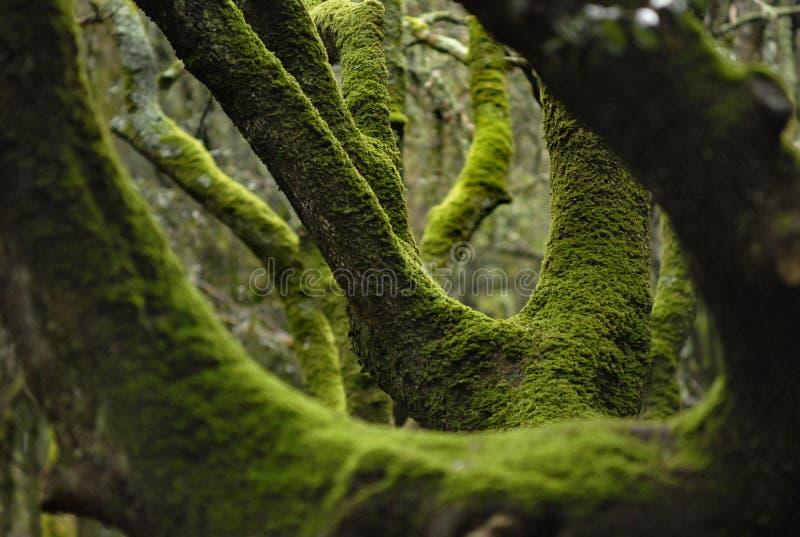 Musgo verde nas árvores fotografia de stock royalty free