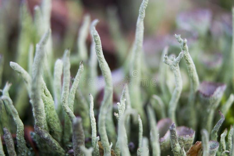 Musgo verde nas madeiras dos Países Baixos fotografia de stock