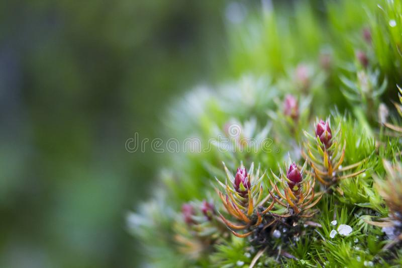Musgo verde nas madeiras dos Países Baixos imagens de stock royalty free