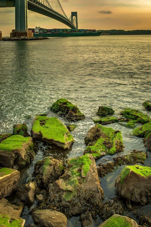 Musgo verde no pé da ponte de Verrazano em Brooklyn, New York imagem de stock royalty free