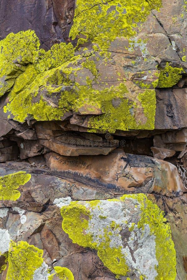 Musgo verde que crece en rocas desnudas en las montañas de Altai, Rusia fotos de archivo