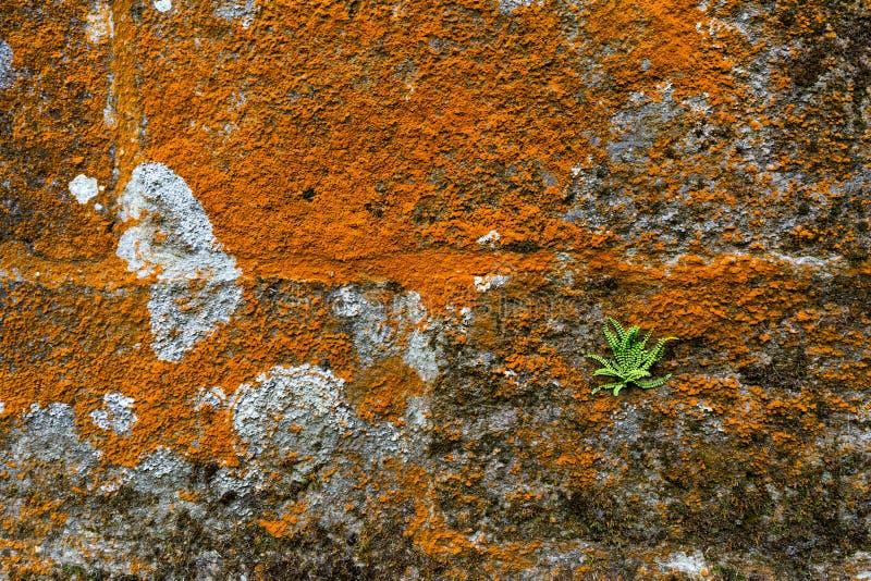 Musgo y helecho en la pared de piedra foto de archivo libre de regalías