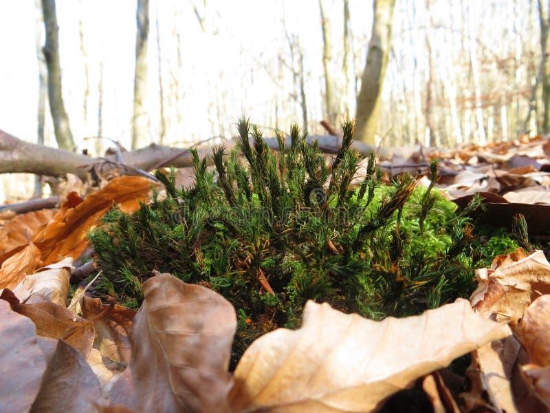 Musgo y hojas imagen de archivo