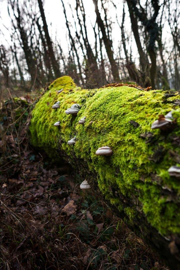 Musgo y setas en árbol de la descomposición fotos de archivo