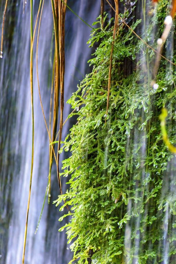 Musgo y vegetación entre las aguas y las piedras de una cascada clara imagenes de archivo