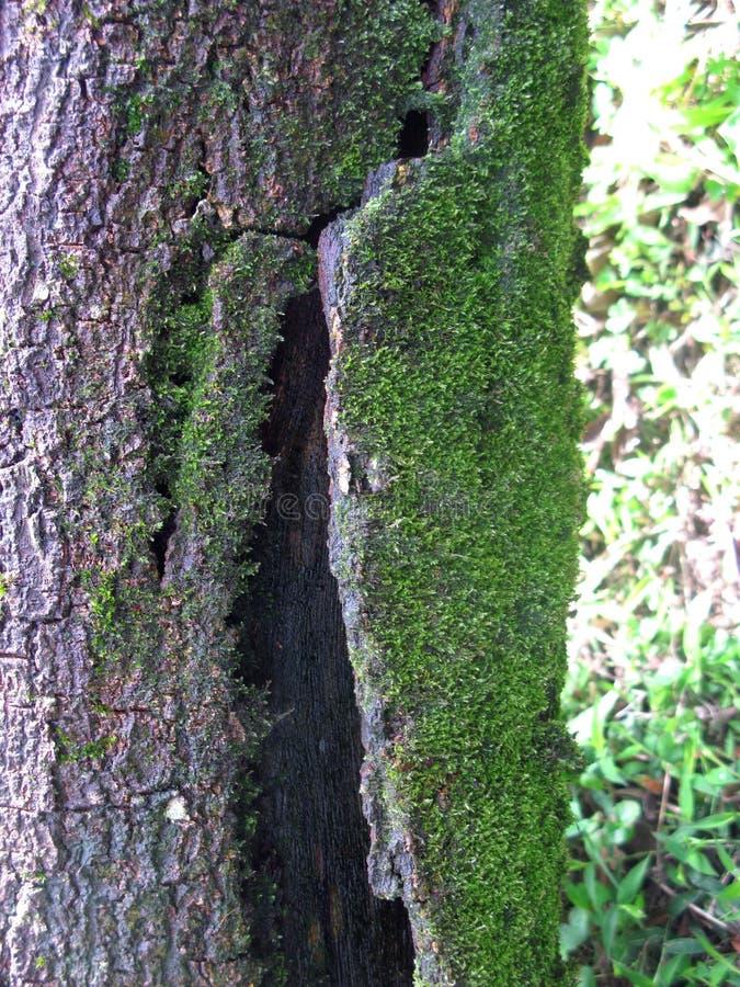 Musgos na casca de árvore imagem de stock royalty free