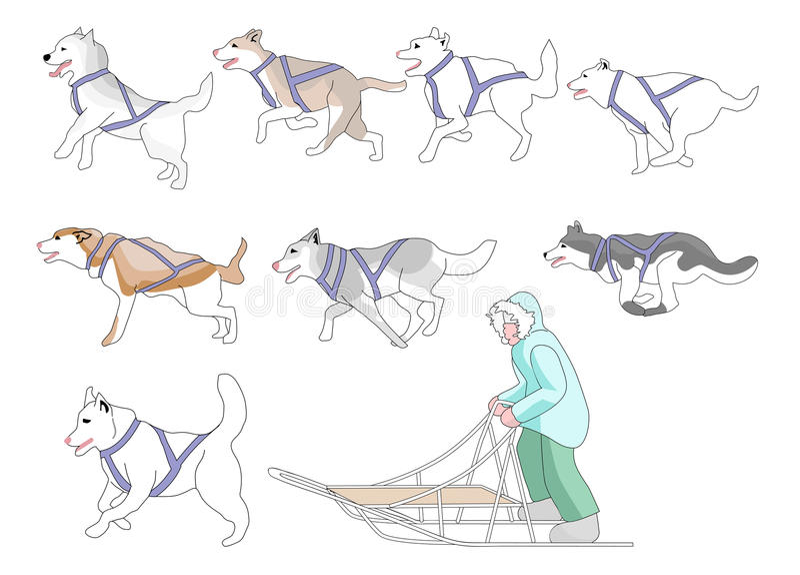 Musher e fósforo da mistura n dos cães ilustração do vetor