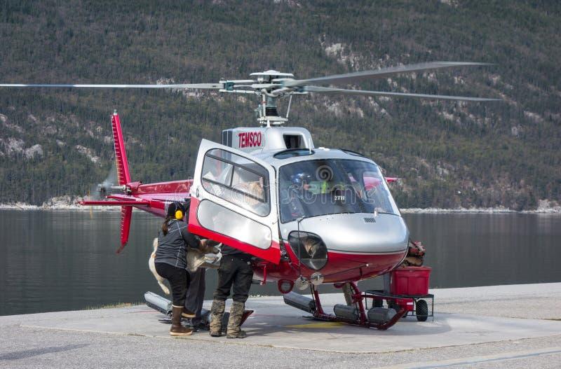Mushers ładuje ich sanie psy na helikopterze przy skagway obraz stock