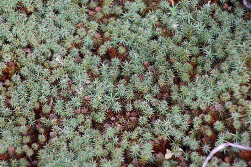 MushrGlade täckte med mossa/taggigt gräs royaltyfria bilder