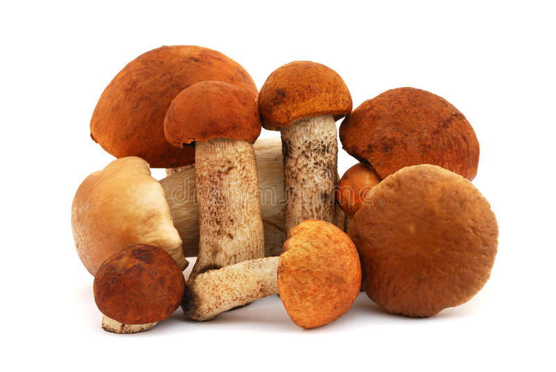 Mushroms image stock