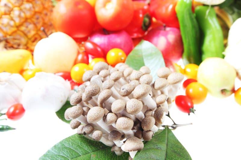 Mushroom Stock Photography