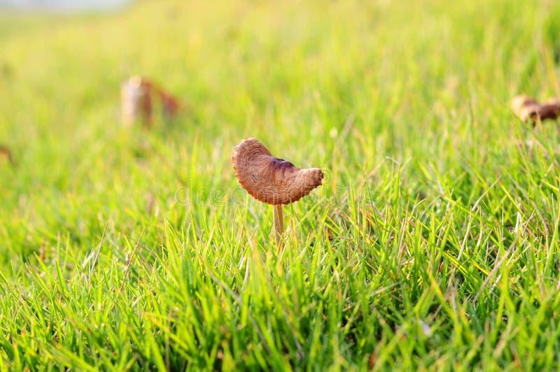 Download Mushroom stock photo. Image of blade, outside, mown, mushroom - 26786676