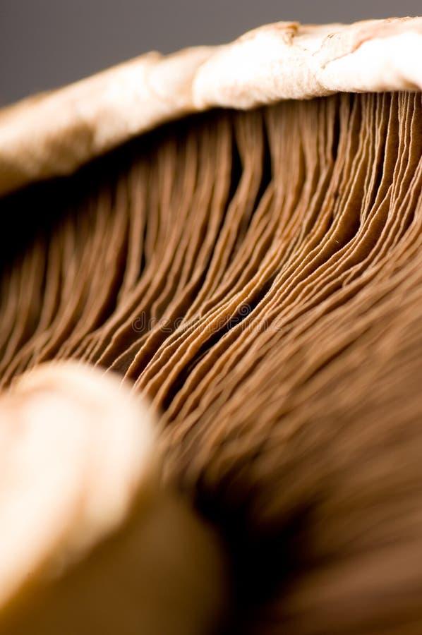 Download Mushroom stock image. Image of foodgroup, groceries, macro - 2815605