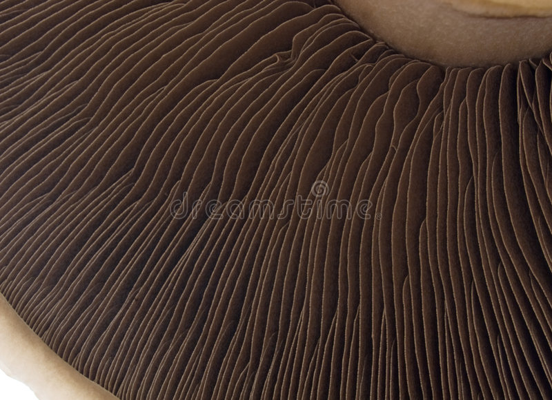 Mushroom royalty free stock photo