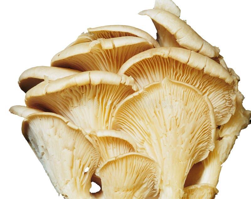 Mushroom 1 Free Public Domain Cc0 Image
