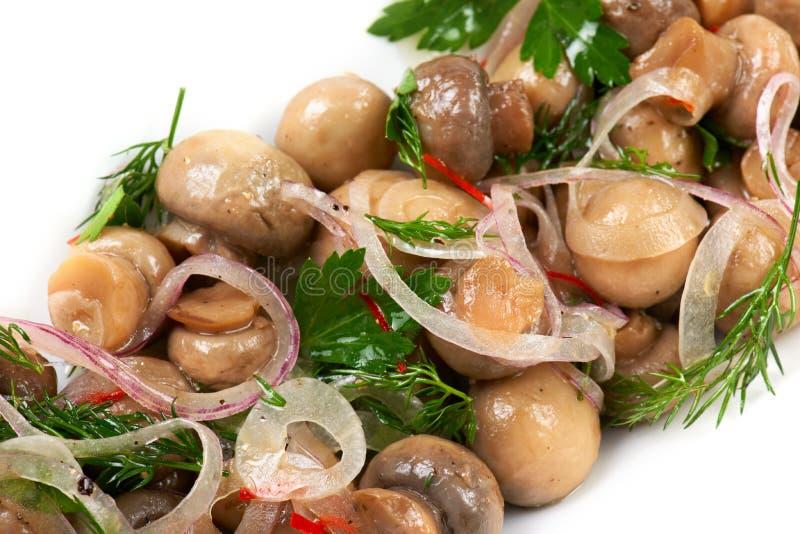Mushroom appetizer stock photography