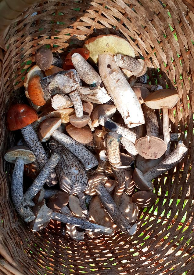 Assorted mushrooms in a wicker basket stock images