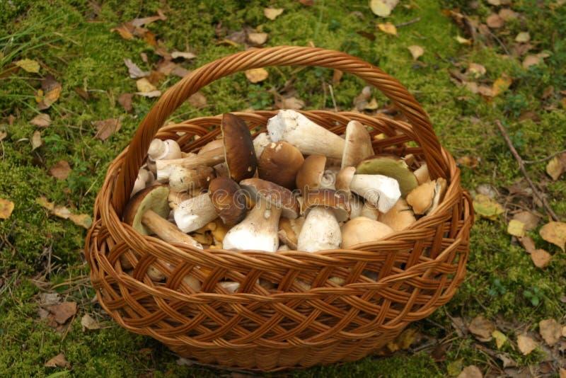 Mushroom Basket Stock Photo