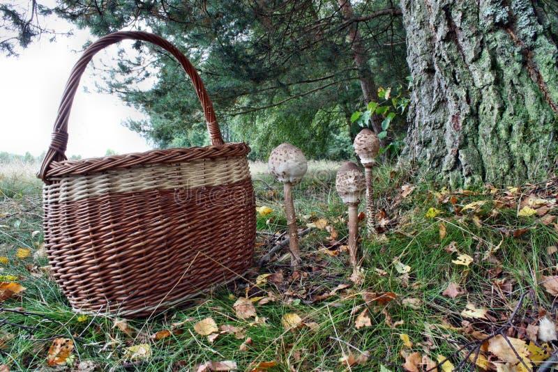 Mushroom and basket stock photos