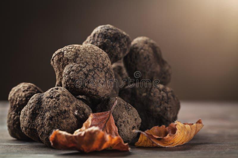 Mushroom black truffle stock image