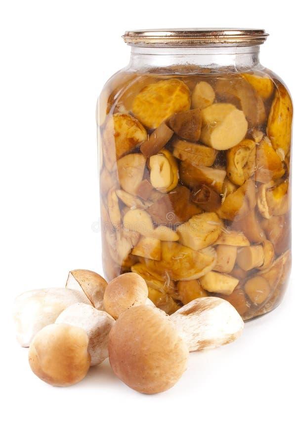 Free Mushroom. Boletus Edulis Preserved Stock Photos - 16338583