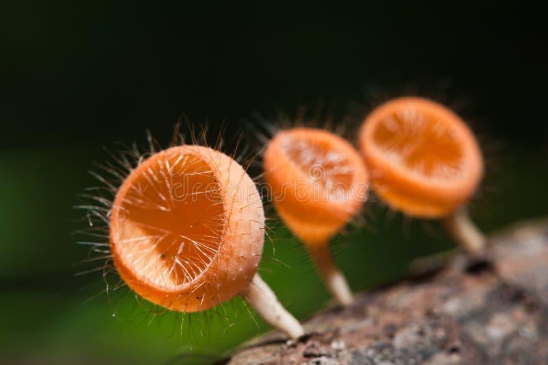 Download Mushroom Champagne stock photo. Image of close, humid - 20451464