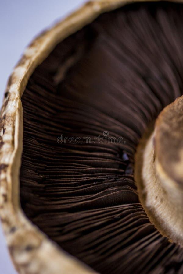 A mushroom stock photos
