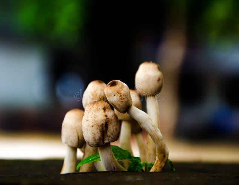 The Mushroom Family royalty free stock image