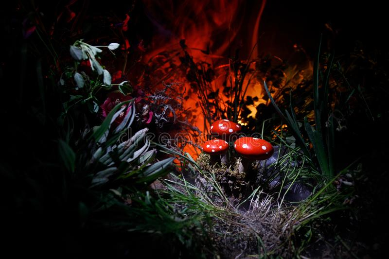 Mushroom. Fantasy Glowing Mushrooms in mystery dark forest close-up. Amanita muscaria, Fly Agaric in moss in forest. Magic mushroo. Three red mushrooms. Fantasy stock photography