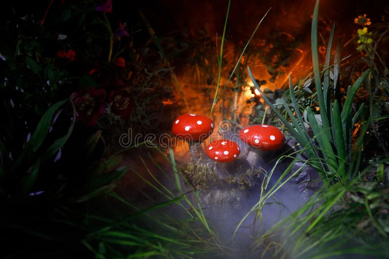 Mushroom. Fantasy Glowing Mushrooms in mystery dark forest close-up. Amanita muscaria, Fly Agaric in moss in forest. Magic mushroo. Three red mushrooms. Fantasy stock images