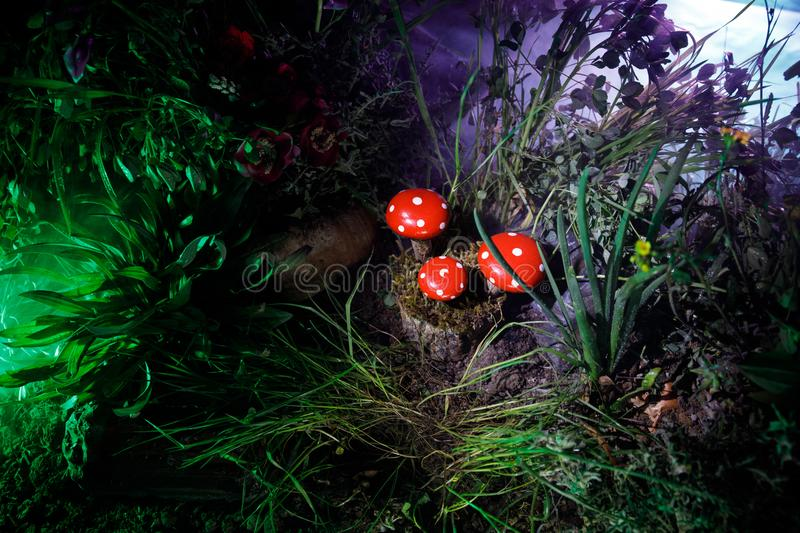 Mushroom. Fantasy Glowing Mushrooms in mystery dark forest close-up. Amanita muscaria, Fly Agaric in moss in forest. Magic mushroo. Three red mushrooms. Fantasy royalty free stock photography