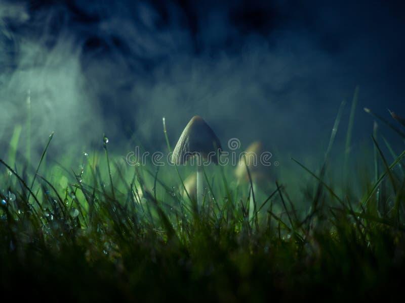 Mushroom in a foggy night. Mushroom on a lawn after the rain on a foggy night royalty free stock photos