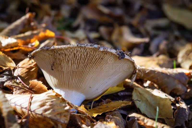 Mushroom, forest mushroom, mushroom in the forest. stock photo