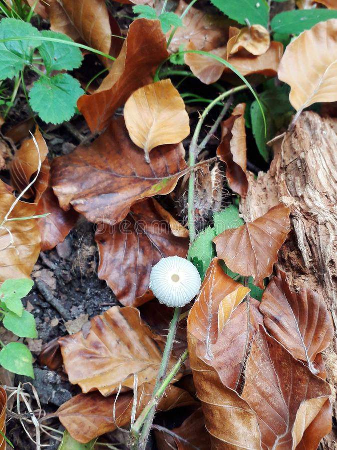 Tiny mushroom in the forest royalty free stock photo