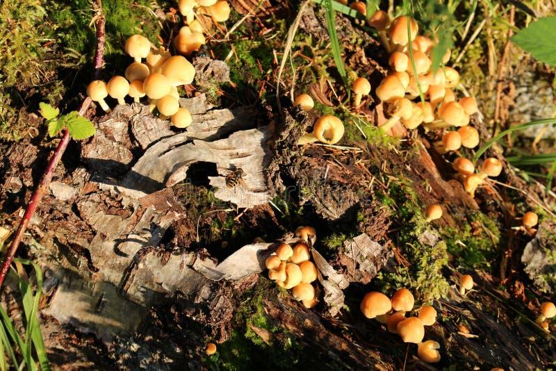 Mushroom Forrest Log stock photography