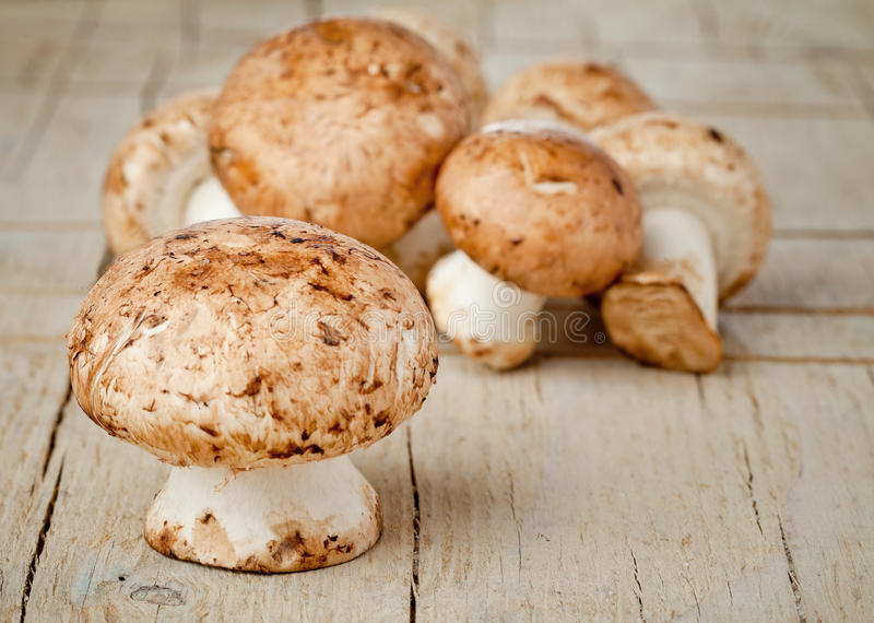 Download Mushroom Fungi Stock Photo - Image: 24324590