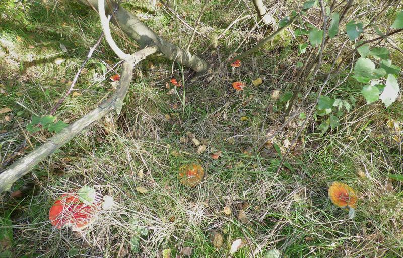Mushroom / Fungus UK - Macro Photography. Macro close up shot of Mushroom / Fungus in woodland located in the United Kingdom stock photography
