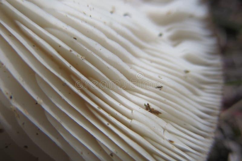 Mushroom gills stock photo