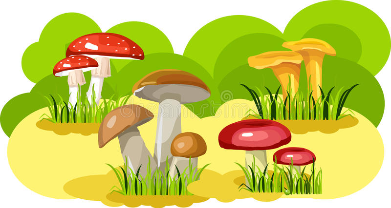 Download Mushroom glade stock vector. Image of field, nature, food - 25477915