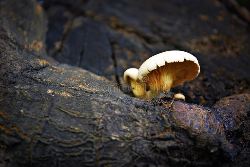 Mushroom Growing on a Tree Branch. Details of Mushrooms Growing on a Tree Branch stock photo