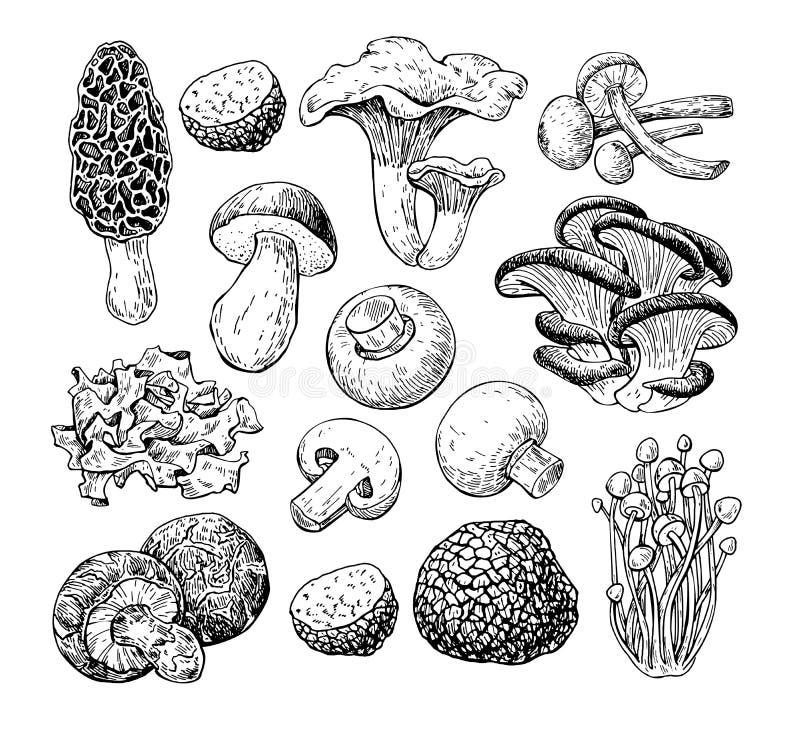 Free Mushroom Hand Drawn Vector Illustration. Sketch Food Drawing Iso Stock Photography - 84116592