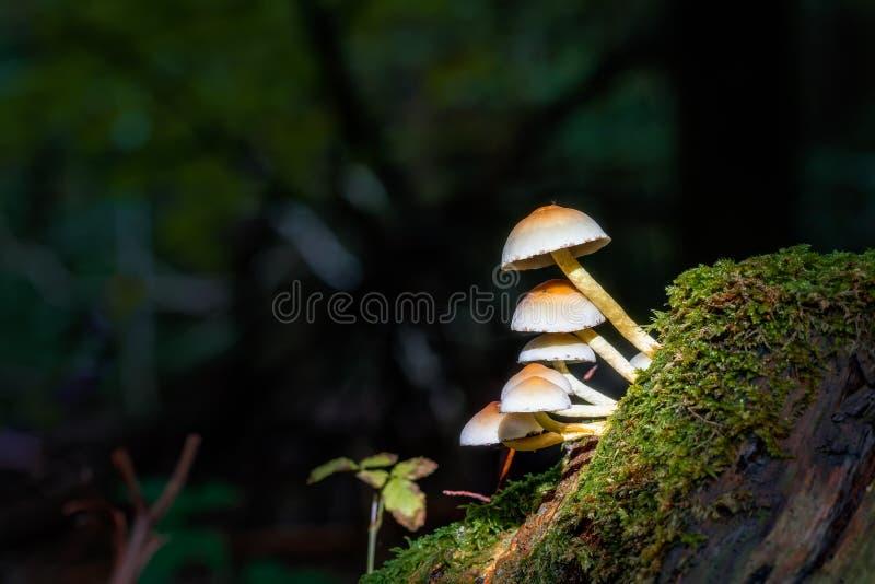 Download Mushroom Kingdom stock image. Image of fungus, mushroom - 33824389
