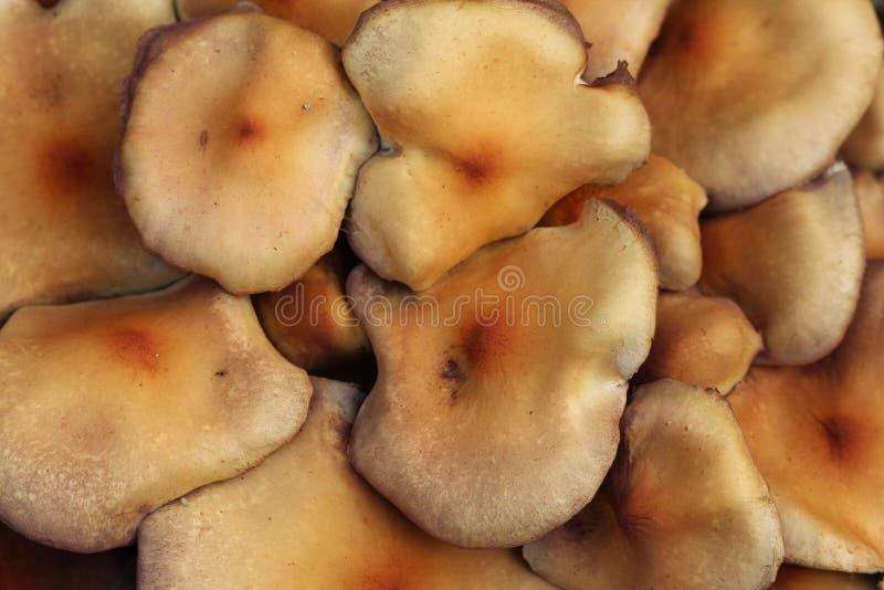 Download Mushroom Macro Royalty Free Stock Photo - Image: 27192905