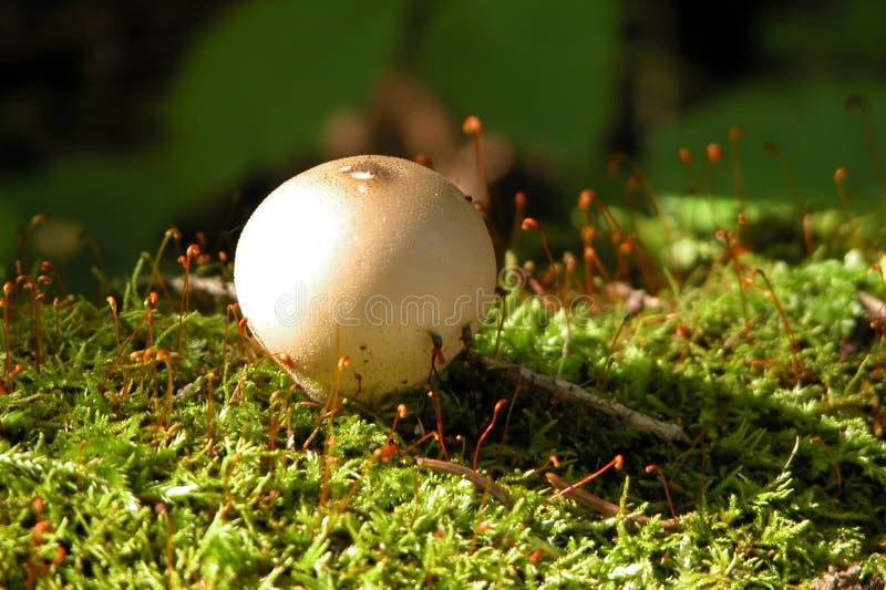 Download Mushroom On Moss Royalty Free Stock Photos - Image: 23088