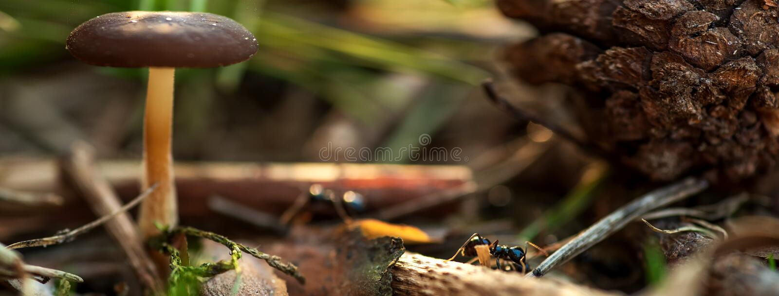 Mushroom, the pinecone and the ant on blurred green background royalty free stock image