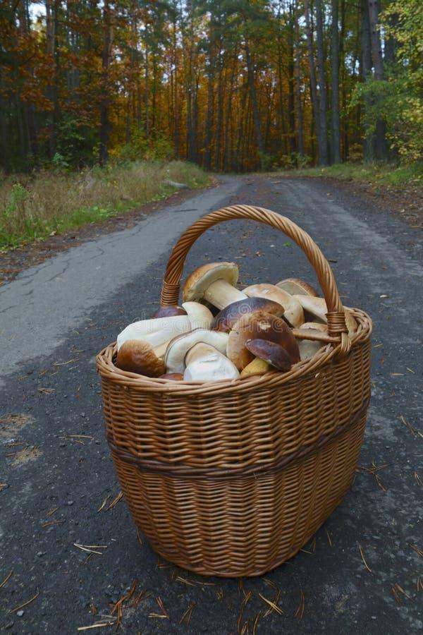 Mushroom season stock images